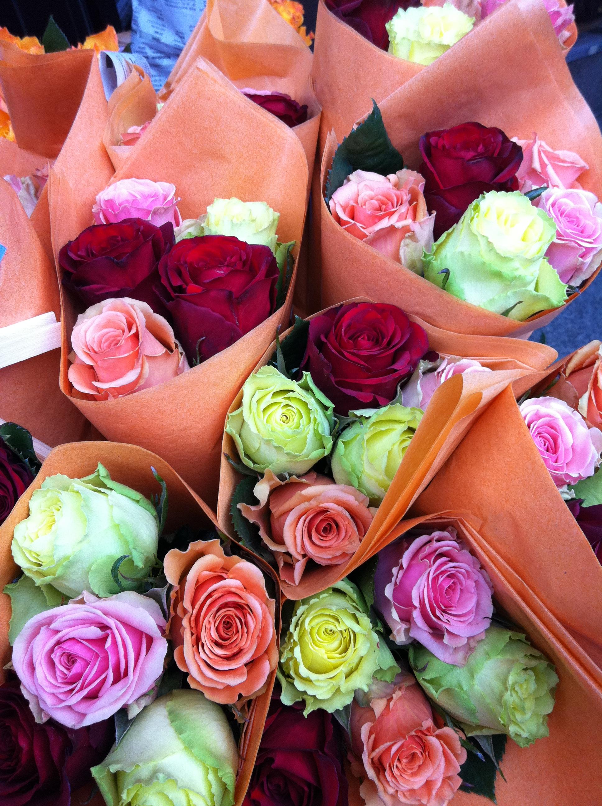 eko roses
